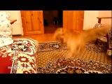 Неожиданная реакция кота на звуки
